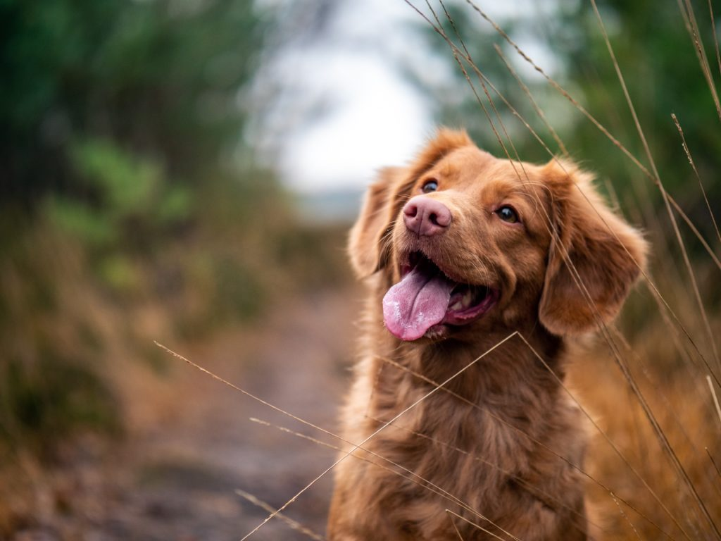 CBD for Pets with Cancer Remedi Shop