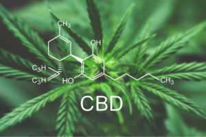 CBD What You Need to Know